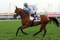 Now we can mit Thierry Thulliez beim Aufgalopp zum Dubai Gold Cup. www.galoppfoto.de - Frank Sorge