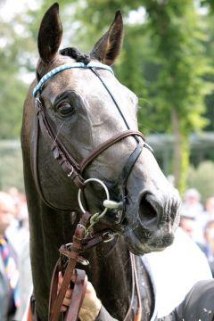 Reliable Man nach seinem Sieg im französischen Derby in Chantilly. www.galoppfoto.de - Sandra Scherning