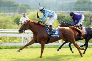 Leggero siegt mit Andre Best 2008 in Bad Harzburg. www.galoppfoto.de