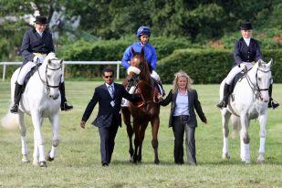 Der Derbysieger Buzzword wird nach alter Tradition von zwei Schimmeln begleitet. www.galoppfoto..de