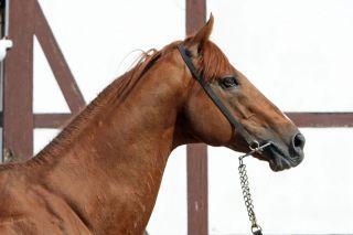 Kalatos stellte mit Ovamba Queen in 2011 eine Gruppesiegerin. www.galoppfoto.de