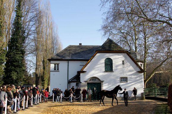 Kamsin wird beim Züchtertag im Gestüt Röttgen präsentiert. www.klatuso.com
